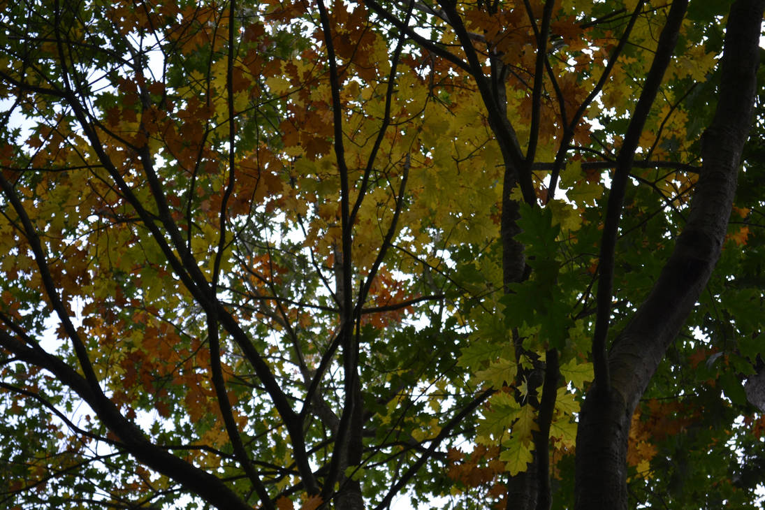 Autumn Canopy - just a bit of sky by yereverluvinuncleber