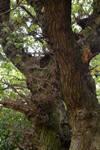 Trunkated Tree by yereverluvinuncleber