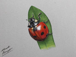 LadyBug DRAWING by Marcello Barenghi by marcellobarenghi