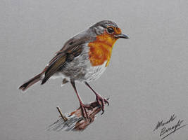 Robin Bird DRAWING by marcellobarenghi