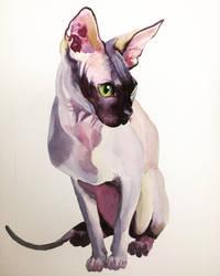 Sphynx Cat in watercolor by JZLeitelt