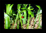 Ladybird by photocell