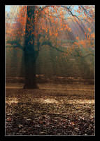 Autumn Rays by medveh