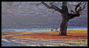Chilly Morning by medveh