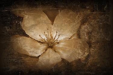 Vintage Flower by medveh