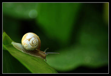 Lonely Snail by medveh