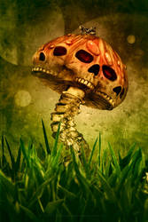 SKULLSHROOM by fensterer
