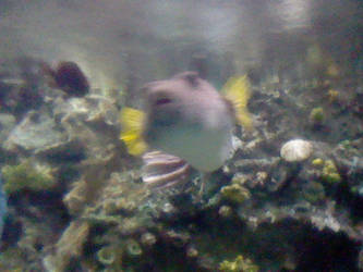 Random fish by Nindendude