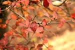 Canon 5D - Autumn by MilanVopalensky