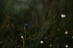 Dragonfly by Anya-Hildebrandt
