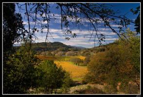 Napa Valley by EvaMcDermott