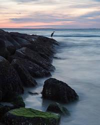 Blue Heron Sunset by EvaMcDermott