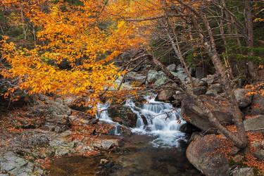 Autumn Splendor by EvaMcDermott