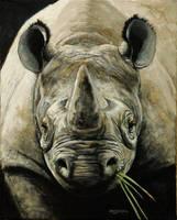 'Rhino I' by crhino