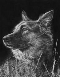 German Shepherd by Wicked-Illusion