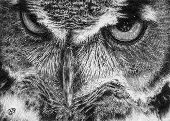The Great Horned Owl by Wicked-Illusion