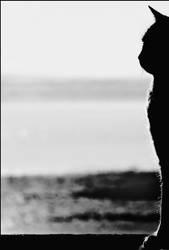 a cat by clockworkApple