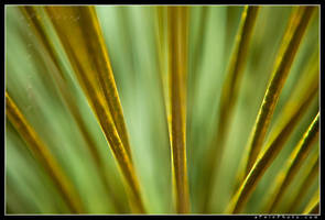 Up Close And Yucca by aFeinPhoto-com