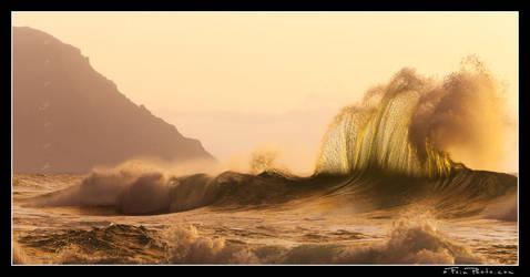 Wavehawk by aFeinPhoto-com