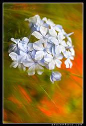 Bouquet by aFeinPhoto-com