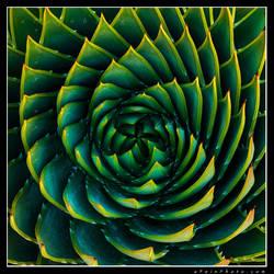 Hypnotized by aFeinPhoto-com