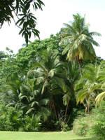 Palms 2 by nwinder