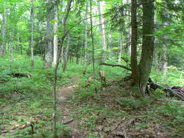 Bad Trail by nwinder