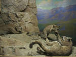 Taxidermy 8 by chamberstock