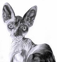 Gato esfinge. by Silvia97M