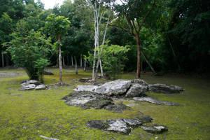 jungle 05. by greenleaf-stock
