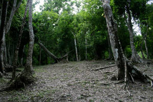 jungle 08. by greenleaf-stock