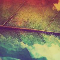Leafy Goodness  by Neighya