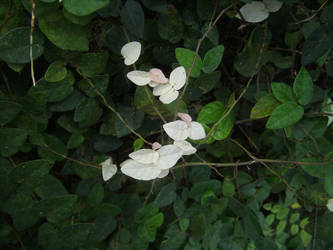 Albino Plant by Bugs-R-Us