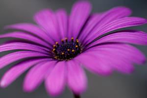 Flower Power by danielion