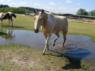 horse by hlsdespite