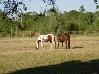 horses by hlsdespite