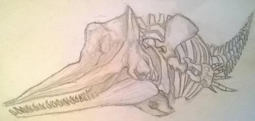Sperm Whale Skeleton by 1masterchef