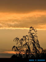 dusk by DaMoni