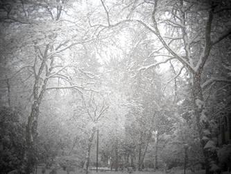 A Snowy Grove by LadySoBe