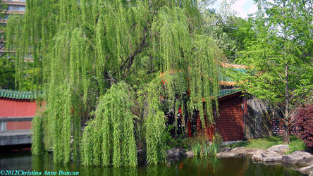 The Weeping Willow by LadySoBe