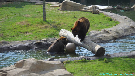 Playful Grizzley Bears by LadySoBe