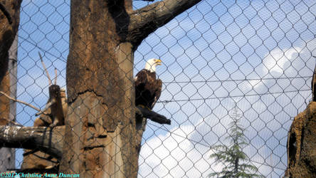 Caged Freedom by LadySoBe