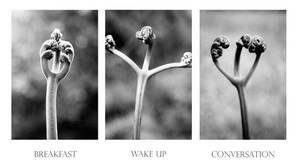 Human Life by Romero-Photography