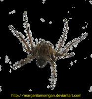 spider03 by margaritamorrigan by margarita-morrigan