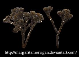 dead plant by margarita-morrigan