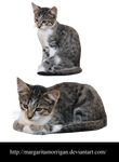 Cats by margarita-morrigan
