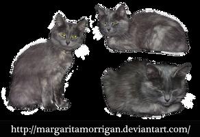 gray cat by margarita-morrigan