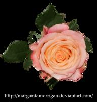 rose by margarita-morrigan