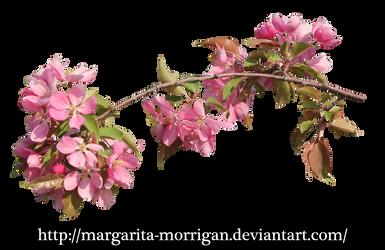 flowering branch 1 by margarita-morrigan
