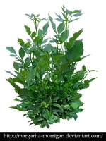 plant3 by margarita-morrigan